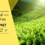 Зеленый чай и косметология
